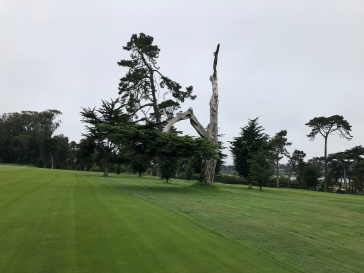 "The course has many unique old trees, including this kind of upside down one the members call the ""F-U"" tree."