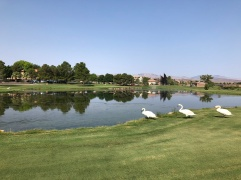 Par-3 3rd with some giant swans hanging out.