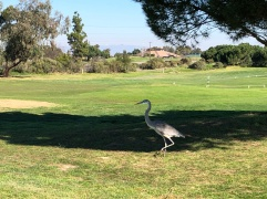 The course logo has a blue heron, so consider this the mascot cameo.